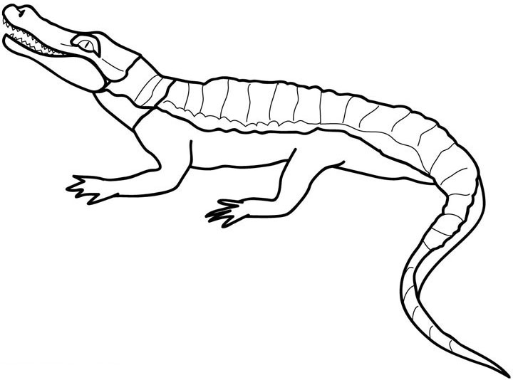perfect crocodile coloring in pages with crocodile