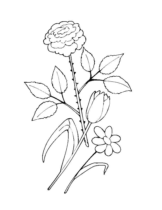 Flower Coloring in Pages 12